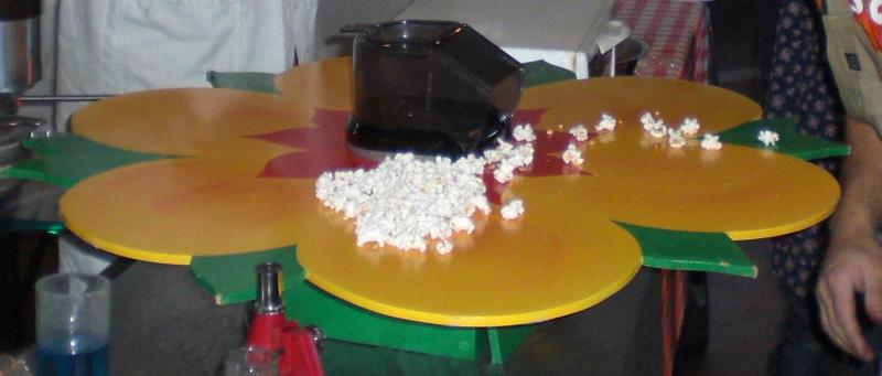 popcornbloem